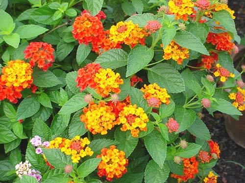 เพลงอุทยานดอกไม้ : ดอกผกา