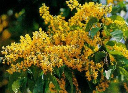 เพลงอุทยานดอกไม้ : ดอกประดู่