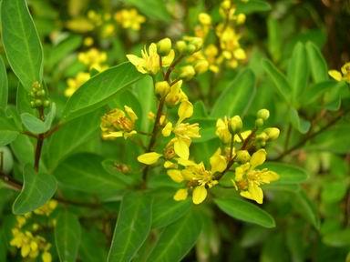 เพลงอุทยานดอกไม้ : ดอกพวงทอง