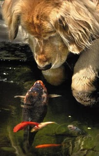 มิตรภาพของสัตว์ต่างสายพันธุ์