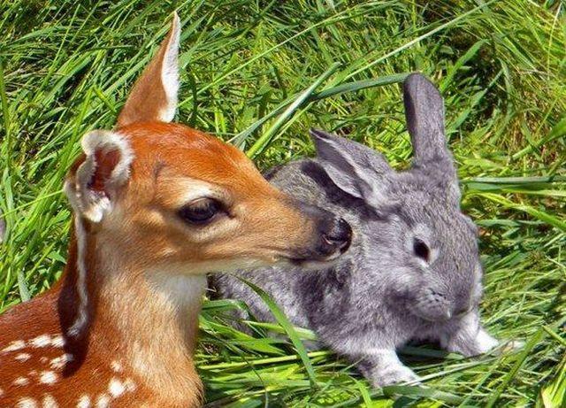 สัตว์โลกน่ารัก :