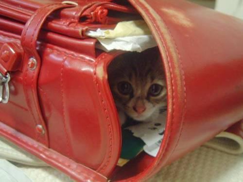 แมวน่ารัก :