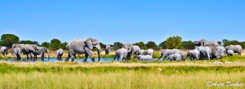 ชีวิตสัตว์โลก Wildlife :