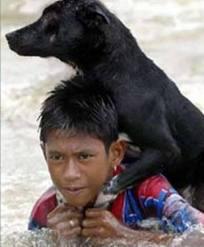 แหมแบบนี้จะให้ไม่ฮาได้ไงช่วงน้ำท่วมเนี่ย : สู้เพื่อน้องหมา