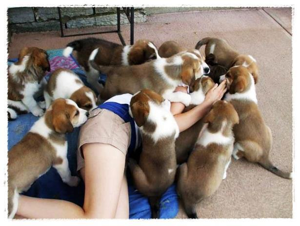 เอาอีกแล้ว!! สุนัขนับ 10 ลุมกัดลูกสาวเจ้าของบ้าน สยอง(ทำใจก่อนดี ขวัญอ่อนห้ามเข้า) : น่ากลัว ^^