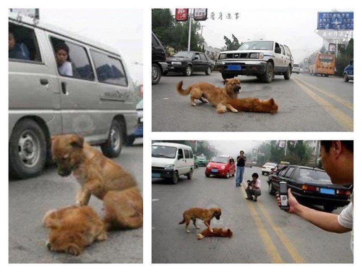 เหลือเชื่อ  หมารักไม่มีวันตาย