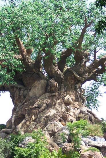 โอ้.... ต้นไม้ :