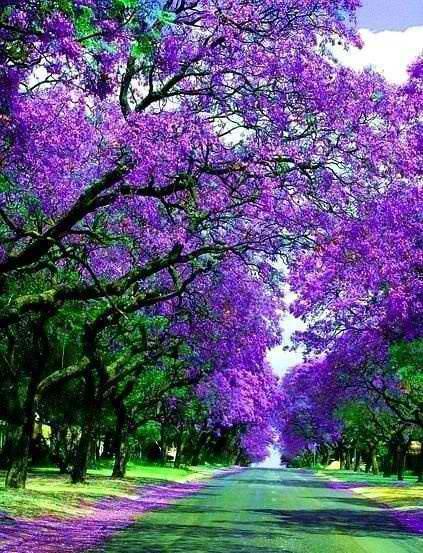 ธรรมชาติสวยๆ