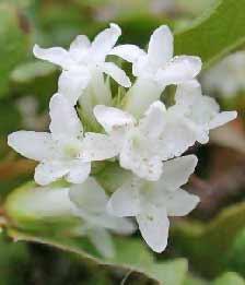 ดอกไม้นานาชนิด :